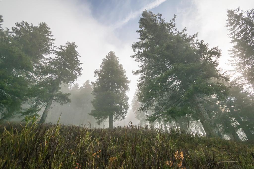 Dunkler Wald, Schwarzwald | Die Serie 'Deutschlands Landschaften' zeigt die schönsten und wildesten deutschen Landschaften.