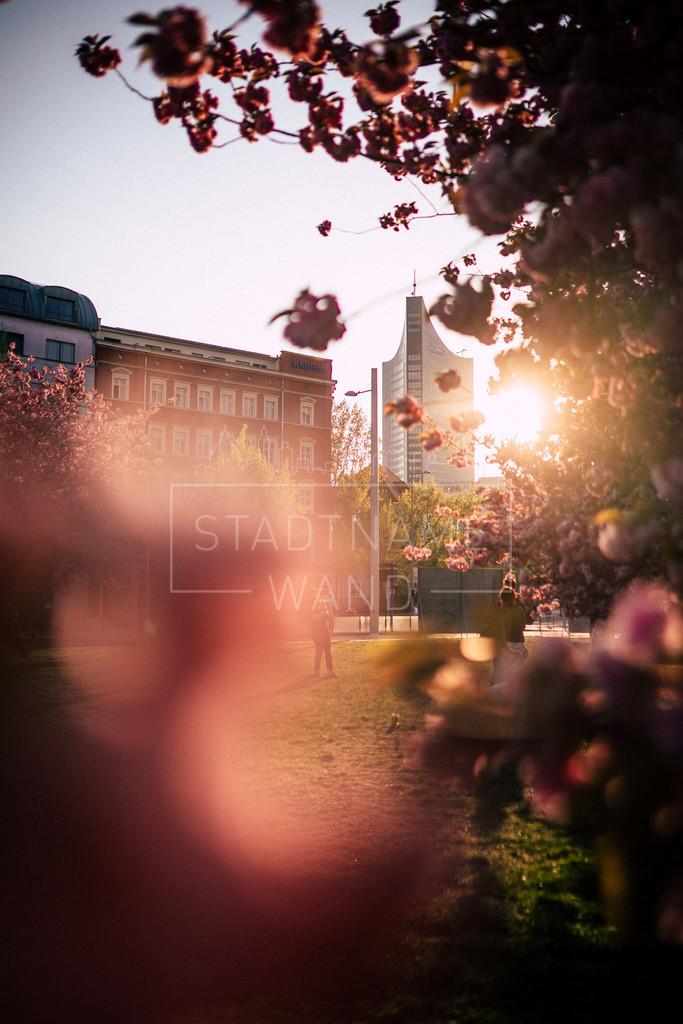 Leipzig Johannisplatz Frühling Kirschblüten (2)