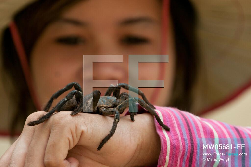 MW05681-FF | Kambodscha | Provinz Kampong Cham | Skoun | Reportage: Kambodschas achtbeiniger Snack | Lebende Vogelspinne auf dem Arm einer Spinnenverkäuferin.  In heißem Öl knusprig gebraten, mit Glutamat, Salz und Zucker vermischt und obendrein mit hauchdünnen Knoblauchscheiben verfeinert - so mögen die Kambodschaner ihre schwarzen Vogelspinnen.  ** Feindaten bitte anfragen bei Mario Weigt Photography, info@asia-stories.com **