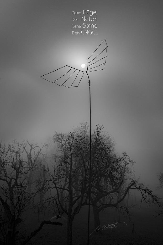 Nebelengel + Text | Deine Flügel, Dein Nebel, Deine Sonne, Dein Engel Licht im Novembernebel, eine Fotografie in meinen Garten.