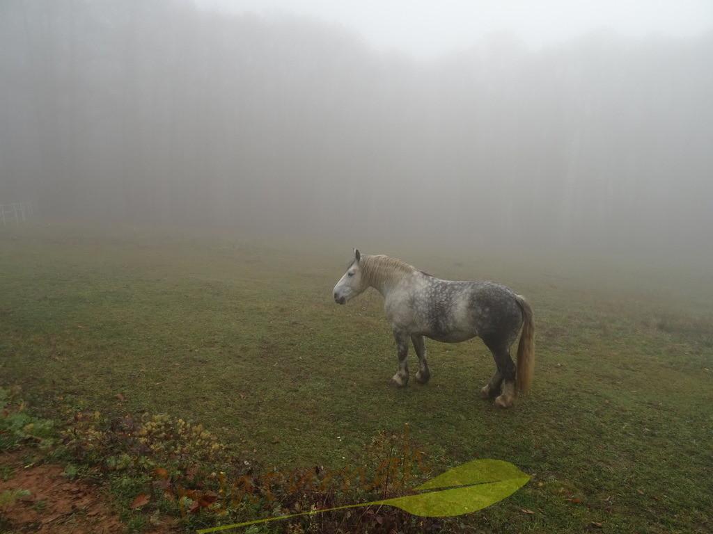 Venus im Nebel