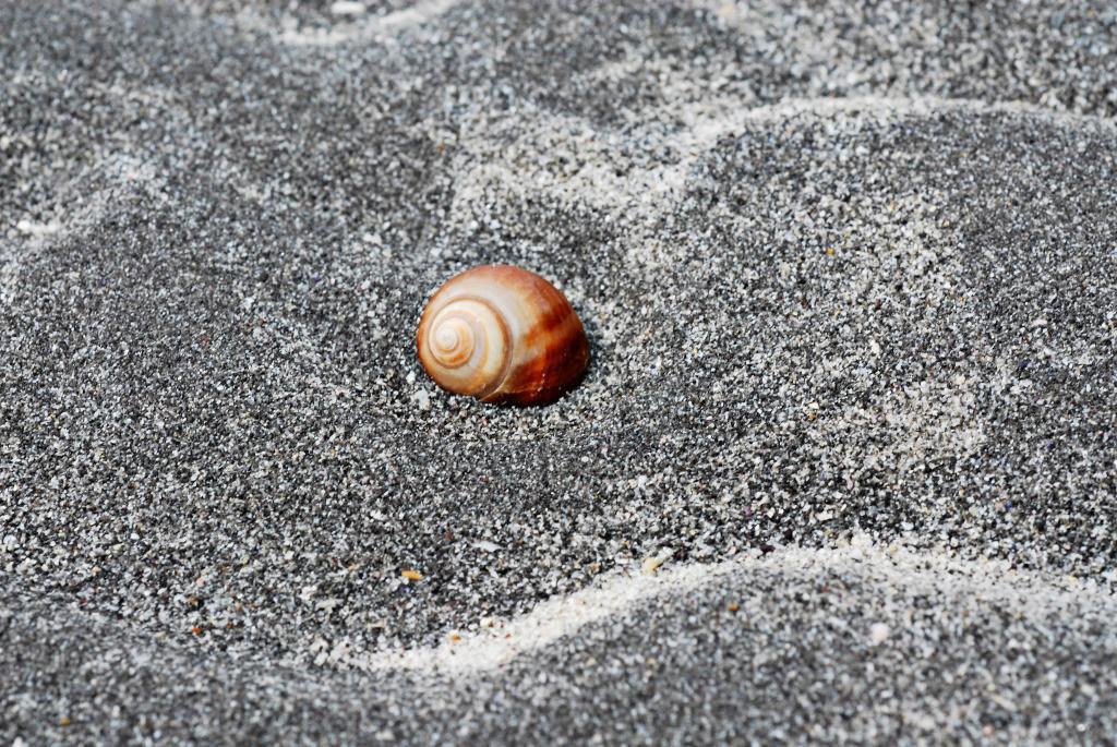 Tai Chi 06 |  Schnecke Inismor, Aran islands, Irland