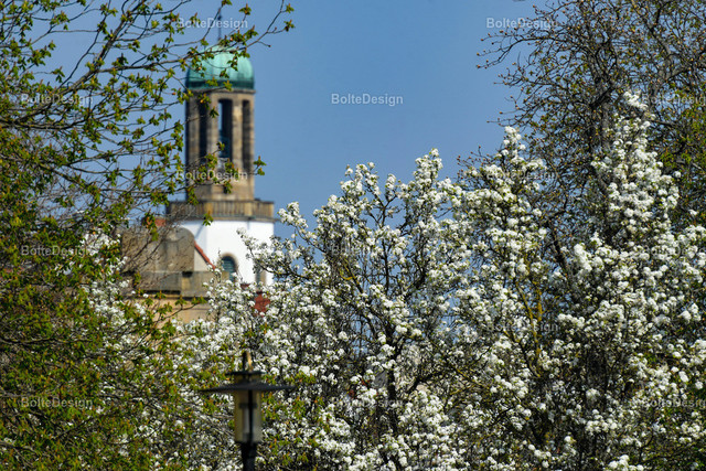 20190401_0269_BLUMEN | FT, Mahlastraße, Speyerer Tor, Zwölf-Apostel-Kirche, Blumen