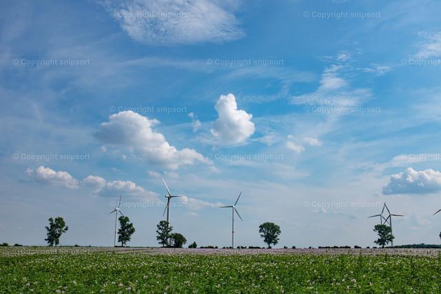 Blumenfeld mit Windkraftanlagen im Hintergrund | Eine Landschaft mit Schönwetterwolken und einem Blumenfeld mit Windkraftanlagen im Hintergrund.