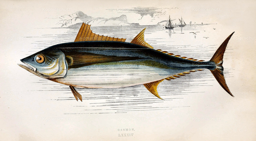 A-History-of-the -Fishes- of- the- British-Islands-Fische-1862-1866 (31)