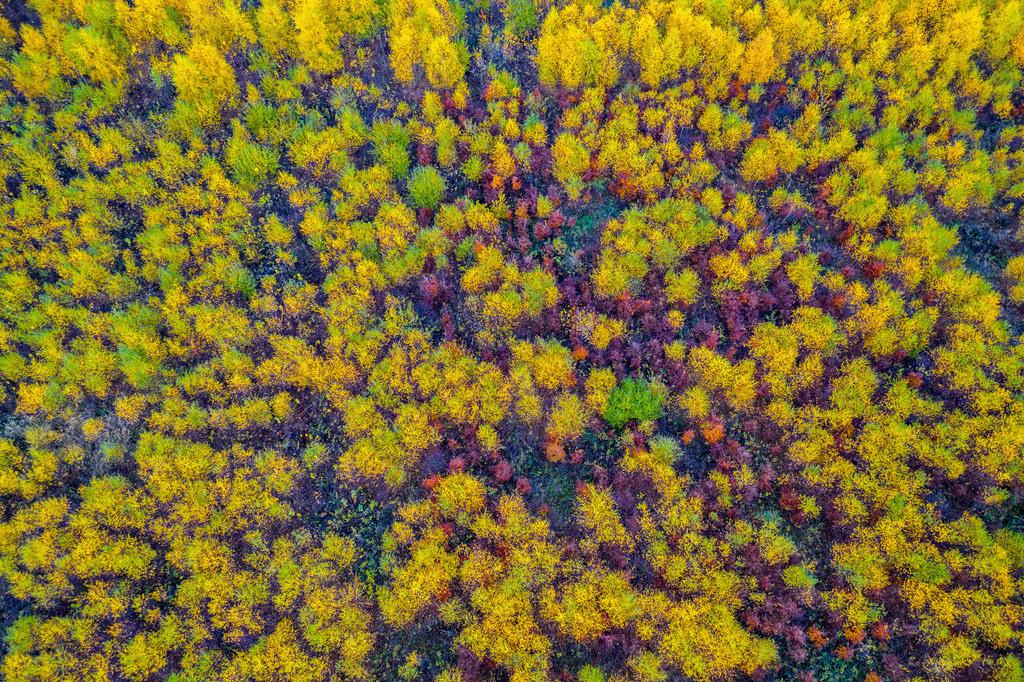 JT-181106-030 | Herbstlicher Wald im Sauerland, NRW, Deutschland, in der Nähe von Schmallenberg,