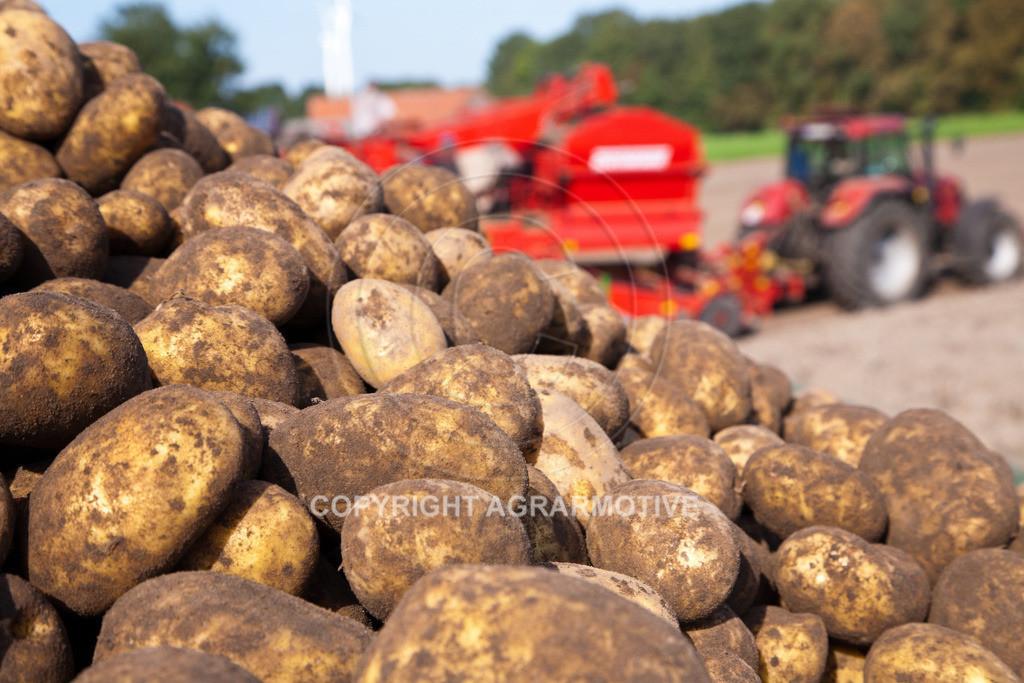 20110929-IMG_5999 | Ernte auf einem Kartoffelfeld - AGRARBILDER