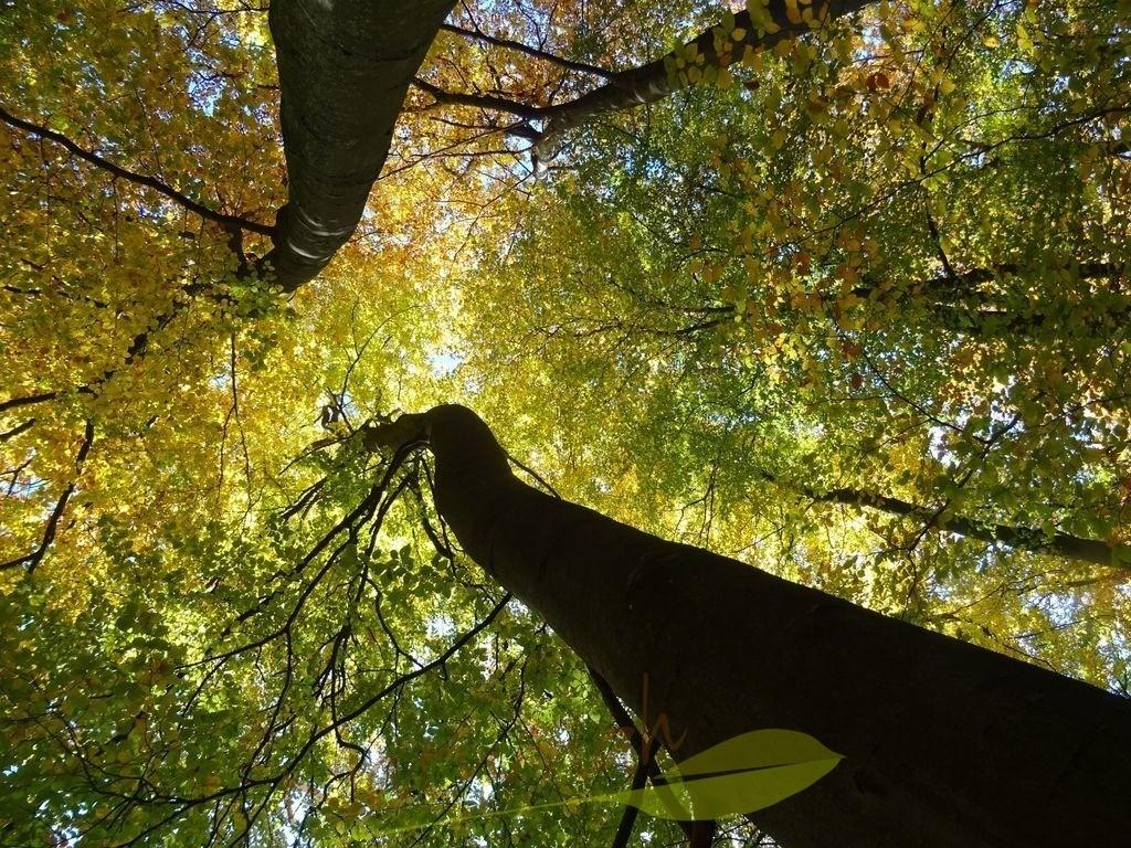 himmelwärts im herbs 3