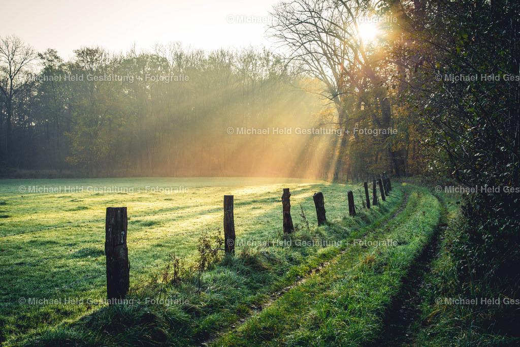 Sonnenaufgang am Wald | Feldweg bei Pratjau im Sonnenaufgang