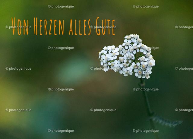 weiße Blüte von Herzen alles Gute   Geburtstagskarte mit einer weißen herz-förmigen Blüte bei Tageslicht vor einem grünen Hintergrund und dem Text Von Herzen alles Gute