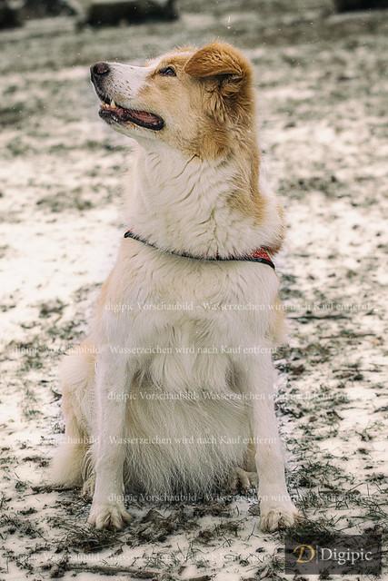 Hund 4 - Vorschaubild | Hund auf der Hundewiese