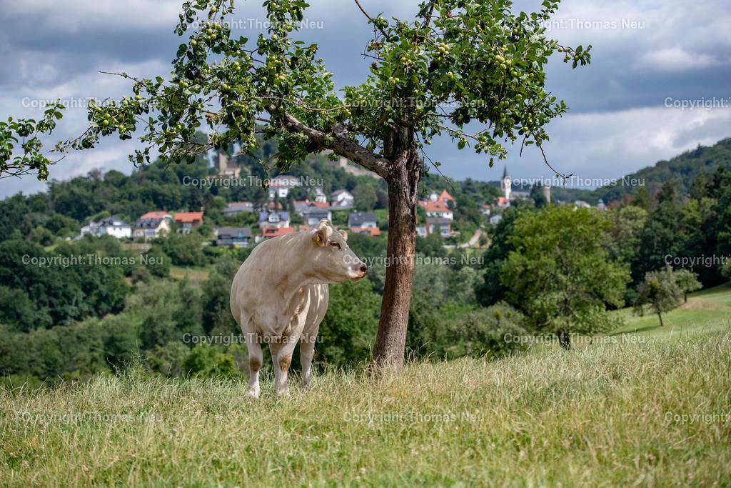 DSC_0206 | Lindenfels, wer sich von Fürth oder Ellenbach Lindenfels nähert dem bietet sich in der Nähe des neuen Infopunkt
