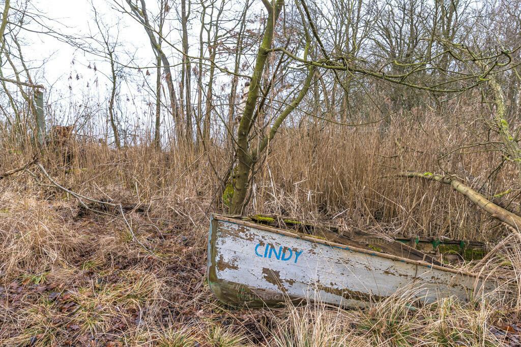 200126_1132-0439 | Cindy wartet auf das Wasser. Am letzten Sonntag haben wir eine Wanderung am Kölpinsee unternommen, letztendlich waren es 9,5 Stunden und 23 km :-)