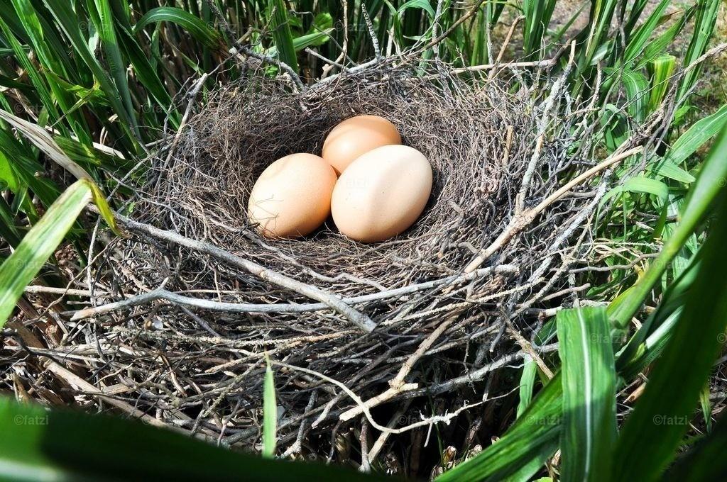 eier-nest_5-11_023k_1