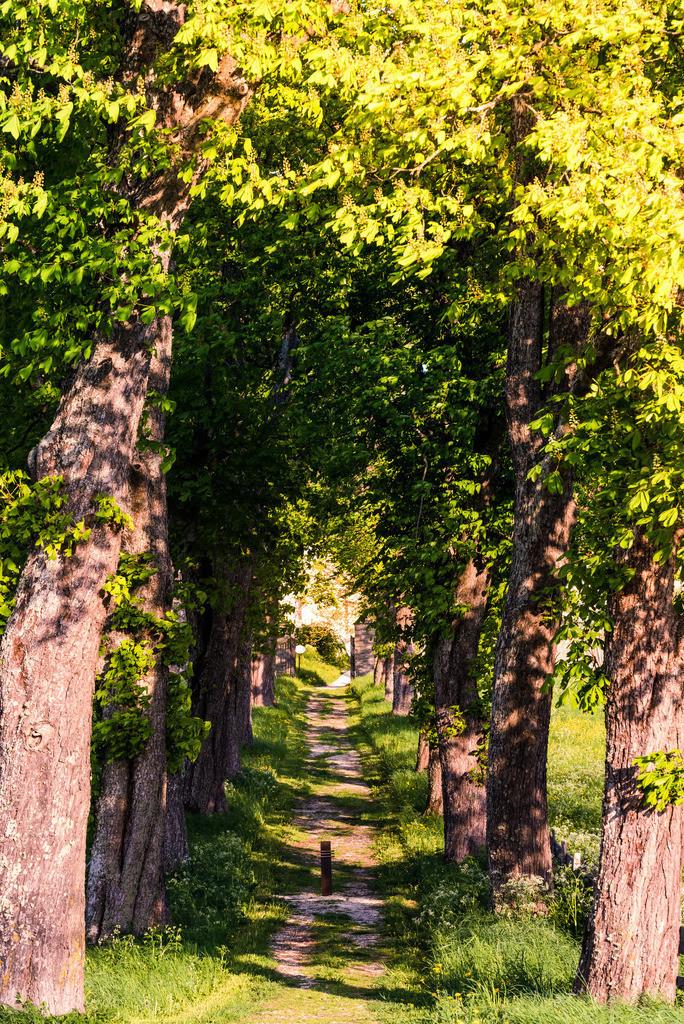 Waldweg | Allee beim Stift St. Georgen bei St. Veit