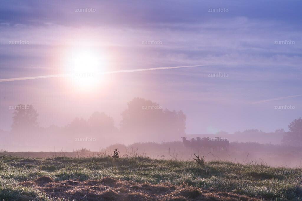 0-120814_0632-7758-69   --Dateigröße 5717 x 3811 Pixel-- Koppel im Nebel. Standort - 53°32'27.31