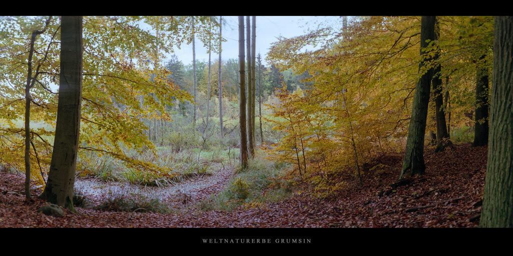Weltnaturerbe Grumsin | Moor und Buchen im Weltnaturerbe Buchenwald Grumsin im Herbst