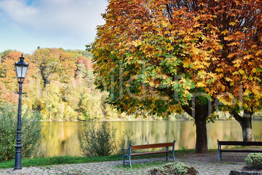 Herbst am Ulmener Maar | Ulmen, Eifel / Vulkaneifel