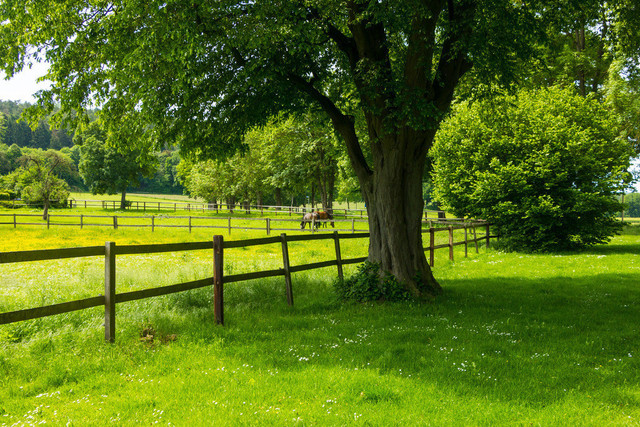 Pferdekoppel mit grasenden Pferden.  | Pferdekoppel mit auf der Wiese grasenden Pferden.