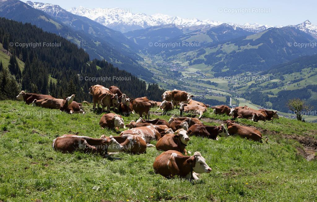 A_LUI_27052017_10 | KITZBUEHEL TIROL AUSTRIA OESTTEREICH FEATURE BRUNNEN WASSER FOTO:FOTOLUI