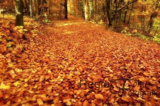 Herbstlicher Weg | Weich und sanft liegt der herbstliche Weg vor uns