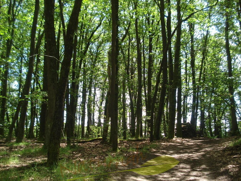 Sonnige Waldzeit