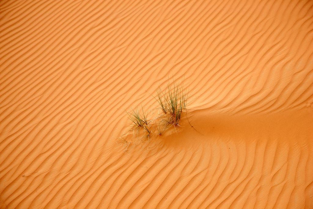 JT-110228-3961 | Roter Sand, Sandduenen, in der Empty Quarter genannten Wueste Rub'al-Khali, vereinzelte Pflanzen ueberleben. Abu Dhabi, Vereinigte Arabische Emirate.