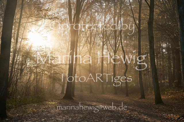 Herbst2984_Marina Hewig | Herbst, Nebel, Raureif