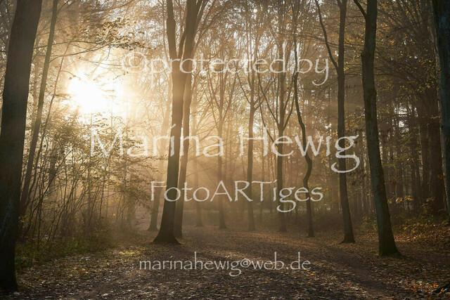 Herbst2984_Marina Hewig   Herbst, Nebel, Raureif