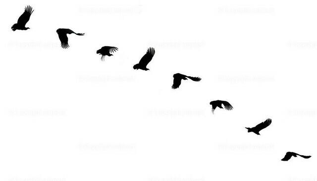 Adler beim Abflug | Eine Bildserie von einem Greifvogel beim Abflug (Silhouette auf weißem Hintergrund).