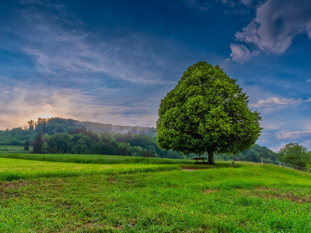 Lindenbaum   Lindenbaum nach einem heftigen Gewitterregen