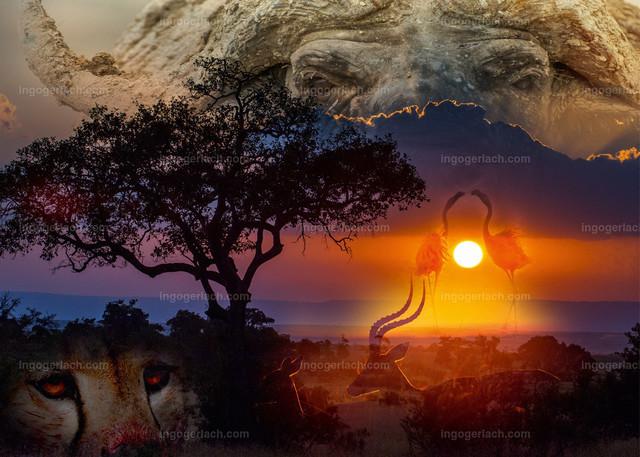 african dreams2