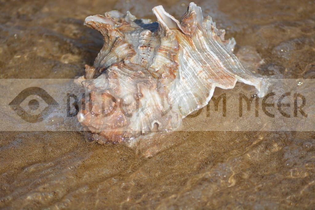 Muschel Bilder vom Strand | Muschelbilder vom Meer