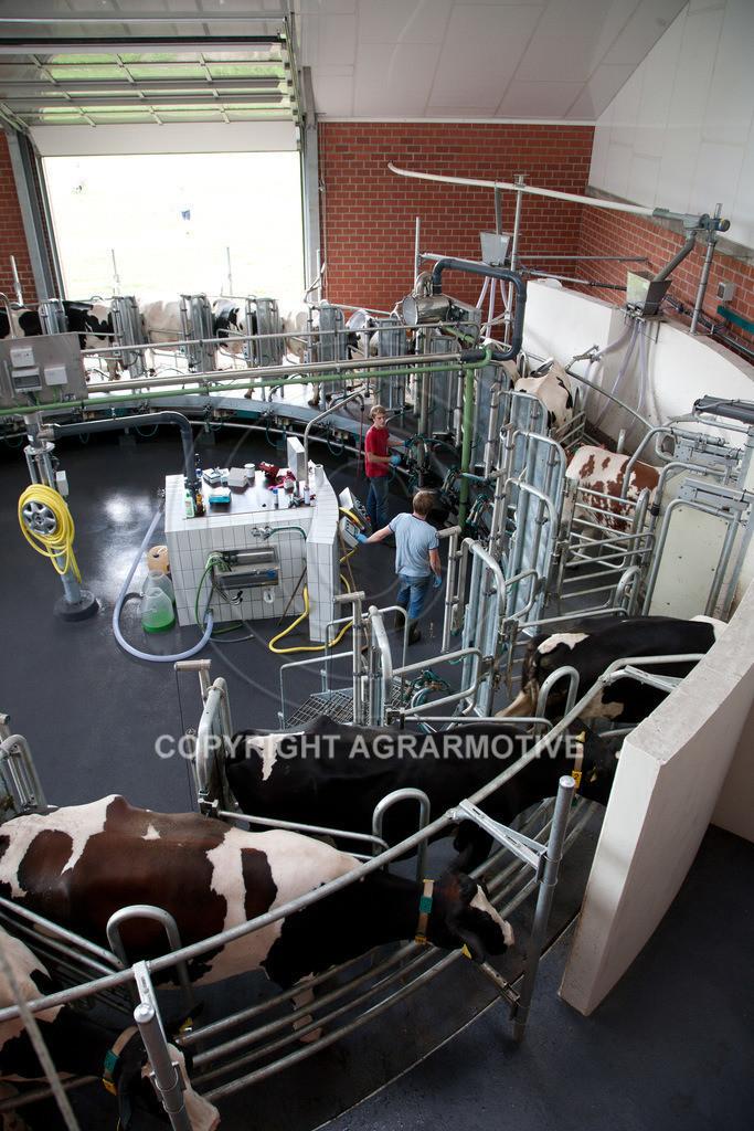 20100821-IMG_0270   Kühe werden im Melkkarussell gemolken