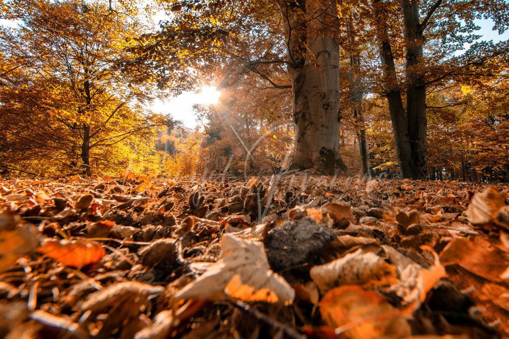 Herbst in Innsbruck | Herbst im Schlosspark von Ambras