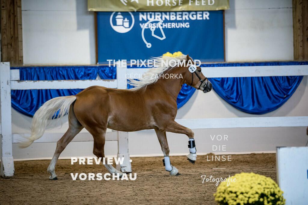 201010-KoerM-21-Nesquick023 | Nesquick v. Neymar, a.d. Nena v. Arogno Horse Gym's Franzl Edelbluthaflinger Foto: www.vor-die-linse.de