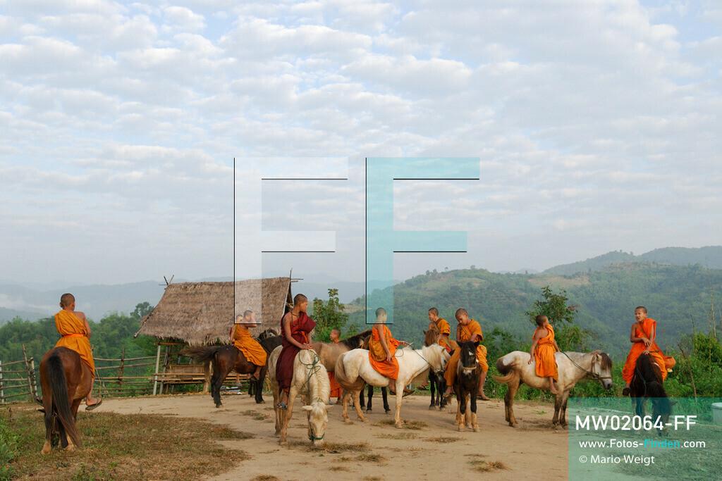 MW02064-FF | Thailand | Goldenes Dreieck | Reportage: Buddhas Ranch im Dschungel | Junge Mönche auf ihren Pferden am Morgen  ** Feindaten bitte anfragen bei Mario Weigt Photography, info@asia-stories.com **