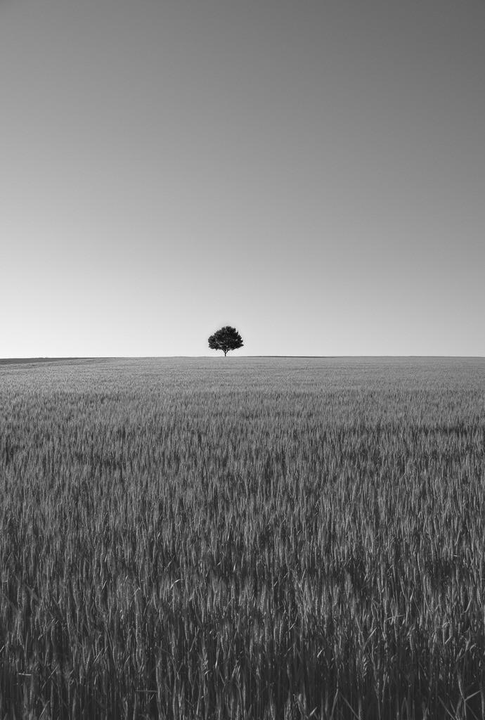 der einsame Baum sw