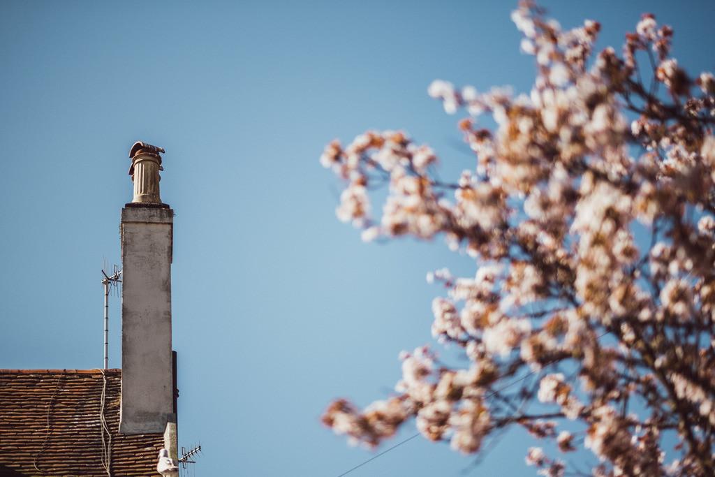 Brighton | typisch britischer Schornstein neben Kirschbaum, blühend, Frühling in Brighton, England