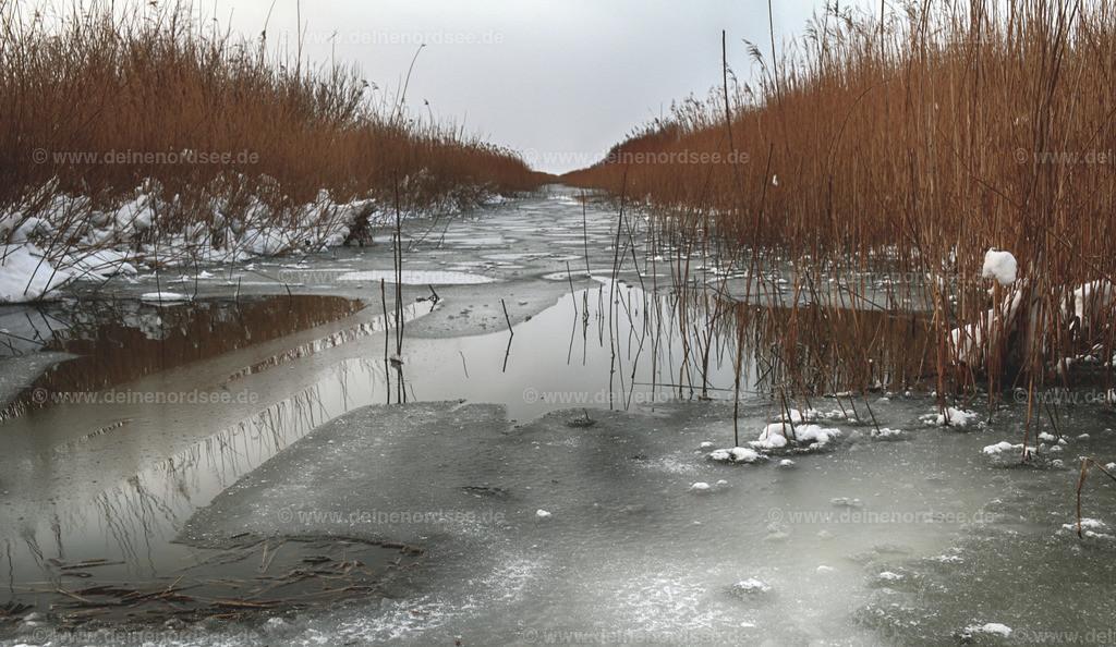 Eisbildung im Beltringharder Koog