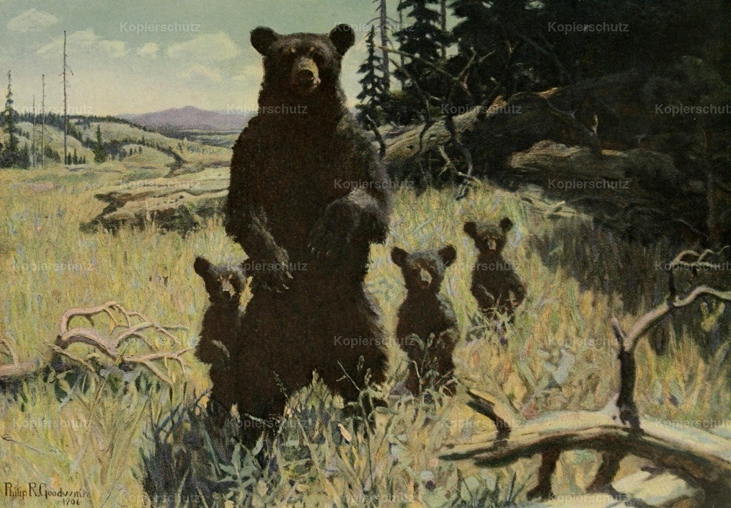 Goodwin_ Philip R. (1881-1935) - Scribners 41 1907 - Grizzly Bears