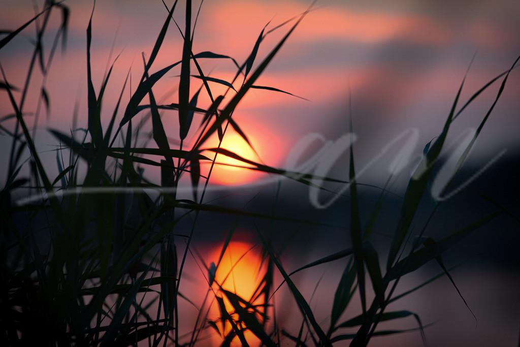 Die Sonne geht unter | Sonnenuntergang mit Schilf