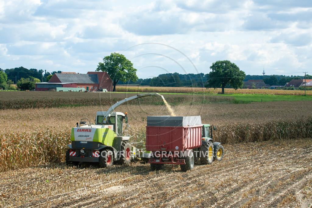 20080914-IMG_9072 | Silomais wird gehäckselt - AGRARFOTO Bilder aus der Landwirtschaft