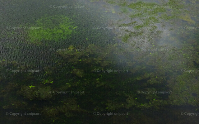Zugewachsener Fluss | Blick auf Wasserpflanzen, die sich über ein Gewässer ausgebreitet haben.