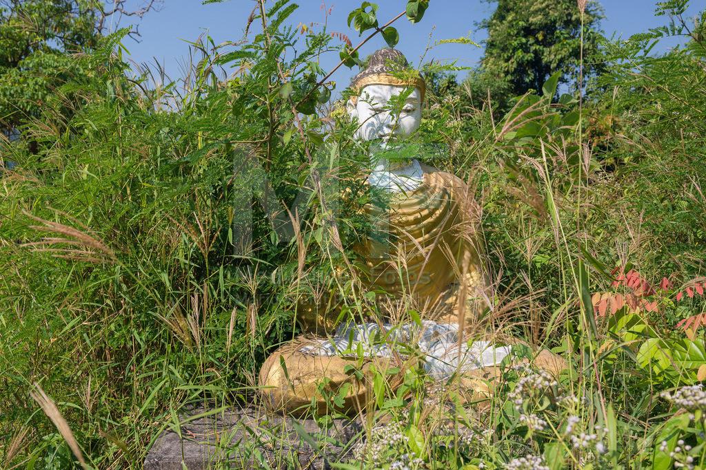 MW0117-3717 | Myanmar: Buddha-Statuen von der Natur zurückerobert