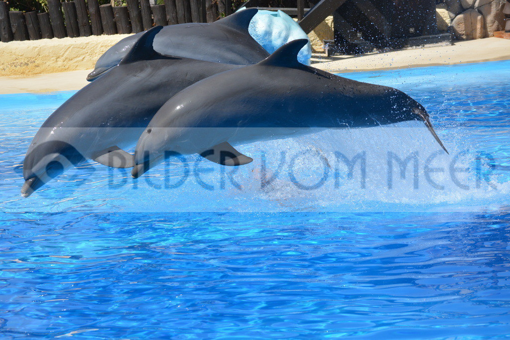 Bilder Delfine  | Foto springende Delfine