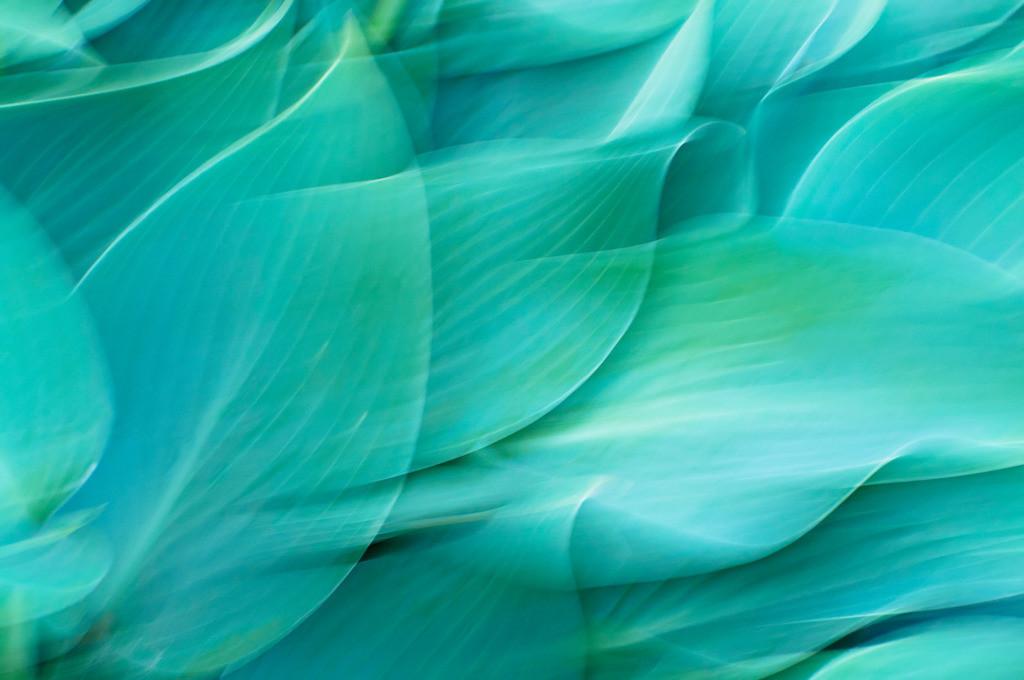 ICM Portrait blaugrüner Funkienblätter | Best. Nr. d_2013_06_0112. Anwendungsvorschläge finden Sie hier: https://shop.soulimages.eu/img/mrxij5 (Behandlungszimmer einer Arztpraxis), https://shop.soulimages.eu/img/ihdlhm (Aufenthaltsraum oder Besprechungraum eines Unternehmens). Weitere Einrichtungsbeispiele sind in der Galerie