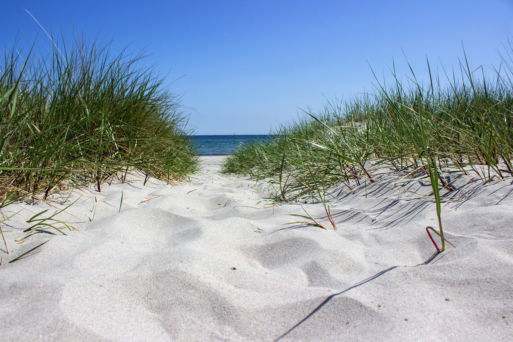 Strand in Kronsgaard | Weg zum Strand in Kronsgaard im Frühling
