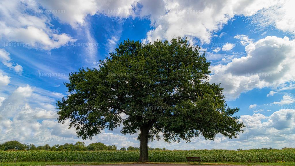 Baum mit Bank | Eine Bank unter einem Baum mit Wolkenhimmel.