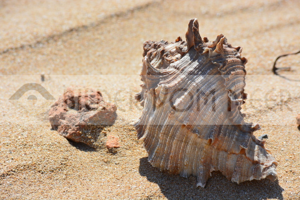 Bilder vom Meer | Muschel Bilder